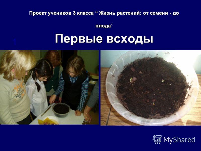 Проект учеников 3 класса Жизнь растений: от семени - до плода Первые всходы 1