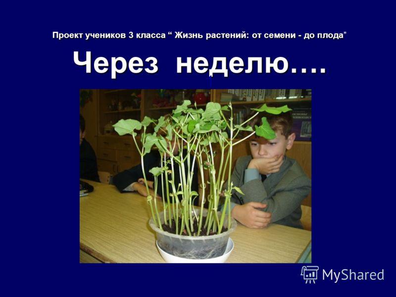 Проект учеников 3 класса Жизнь растений: от семени - до плода Через неделю…. 1
