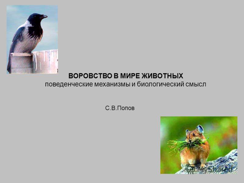 ВОРОВСТВО В МИРЕ ЖИВОТНЫХ поведенческие механизмы и биологический смысл С.В.Попов