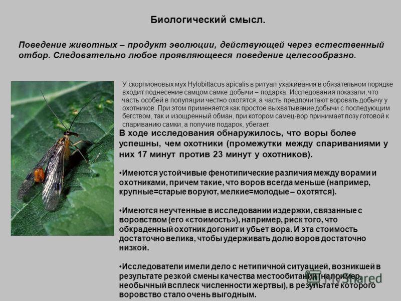 Биологический смысл. У скорпионовых мух Hylobittacus apicalis в ритуал ухаживания в обязательном порядке входит поднесение самцом самке добычи – подарка. Исследования показали, что часть особей в популяции честно охотятся, а часть предпочитают ворова