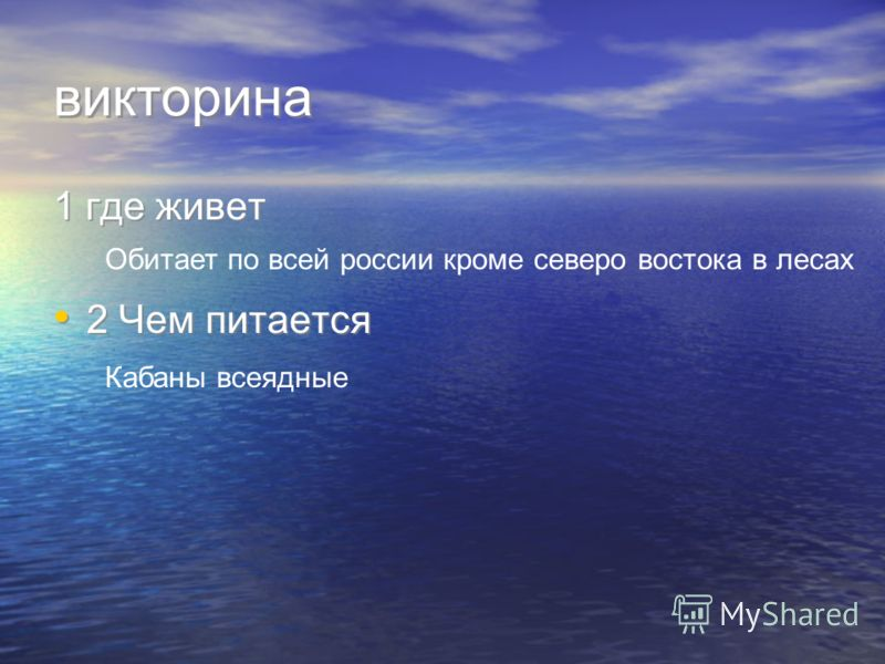викторина 1 где живет 2 Чем питается 1 где живет 2 Чем питается Обитает по всей россии кроме северо востока в лесах Кабаны всеядные