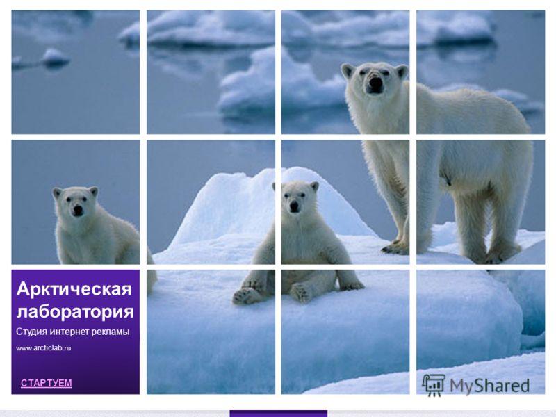 Арктическая лаборатория Студия интернет рекламы www. arcticlab.ru СТАРТУЕМ