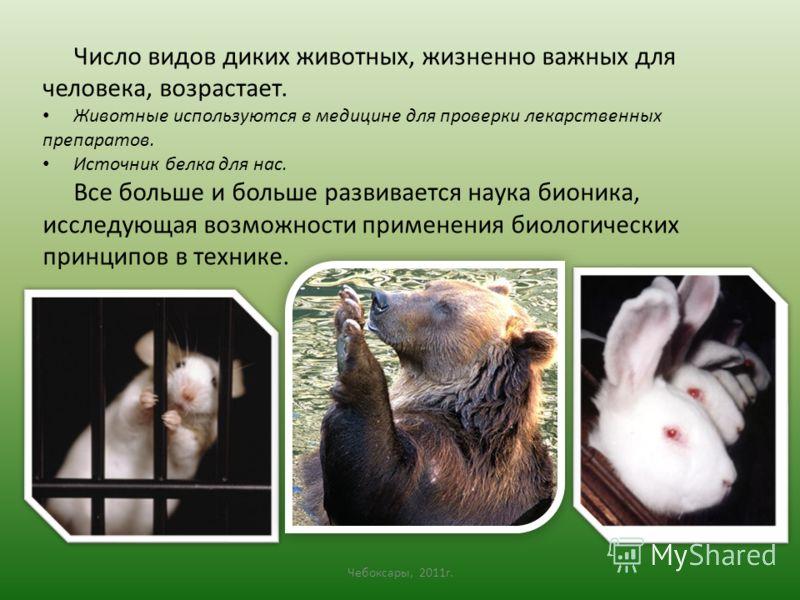 Число видов диких животных, жизненно важных для человека, возрастает. Животные используются в медицине для проверки лекарственных препаратов. Источник белка для нас. Все больше и больше развивается наука бионика, исследующая возможности применения би