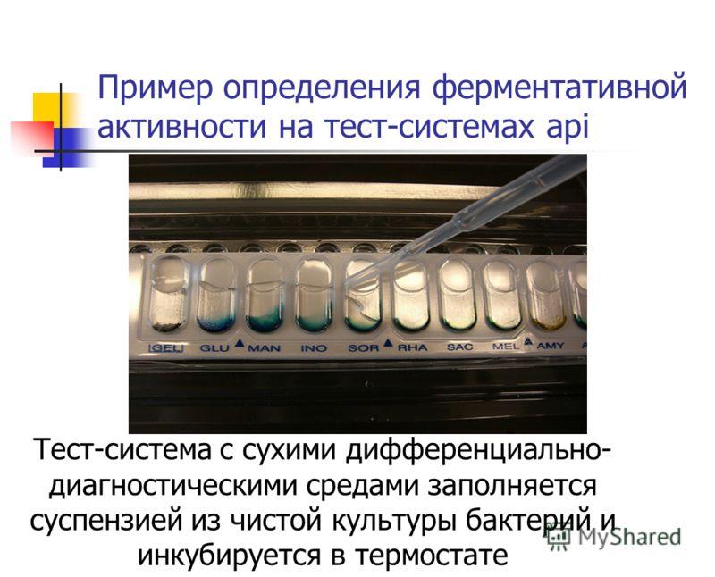 Пример определения ферментативной активности на тест-системах api Тест-система с сухими дифференциально- диагностическими средами заполняется суспензией из чистой культуры бактерий и инкубируется в термостате