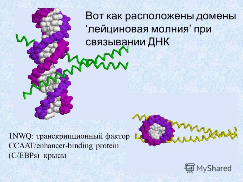 Вот как расположены доменылейциновая молния при связывании ДНК 1NWQ: транскрипционный фактор CCAAT/enhancer-binding protein (C/EBPs) крысы