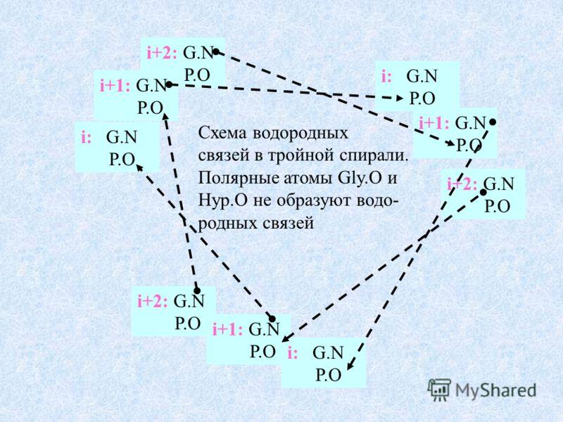 i+2: G.N P.O i+1: G.N P.O i: G.N P.O i+2: G.N P.O Схема водородных связей в тройной спирали. Полярные атомы Gly.O и Hyp.O не образуют водо- родных связей