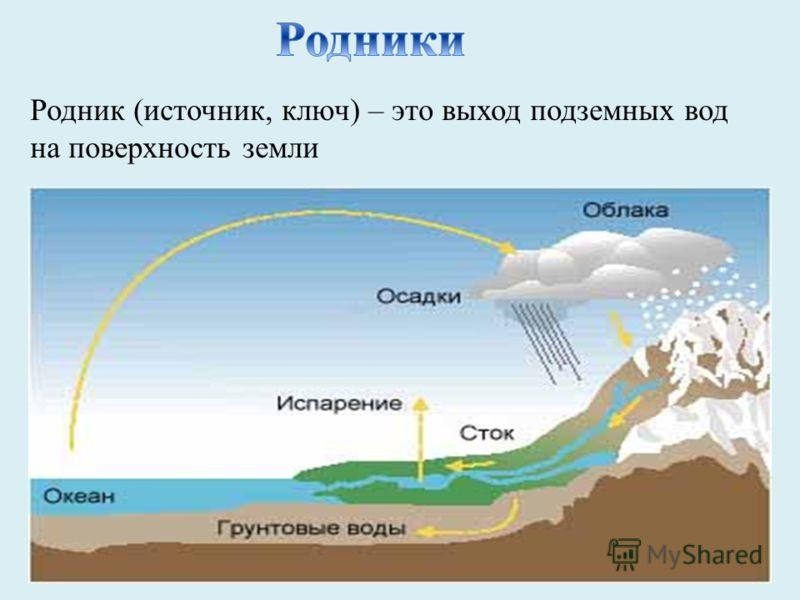 Родник (источник, ключ) – это выход подземных вод на поверхность земли