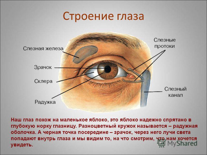 Глаза у человека бывают разные по цвету – карие, голубые, зеленые, но строение глаз у всех одинаковое.