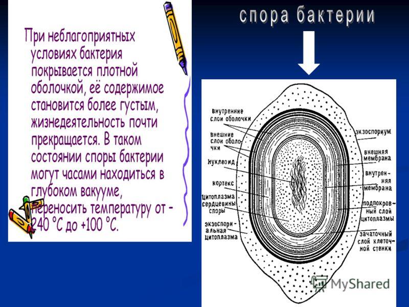 Если клетка удваивается каждые пол часа, то за сутки она способна дать 281474976710656 потомков. А некоторые бактерии способны размножаться еще быстрее.