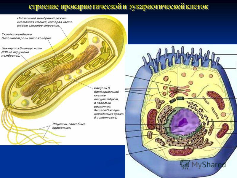 - -Изучение нового материала Бактерии – древнейшие из известных организмов. Следы жизнедеятельности бактерий относятся к архею и датируются возрастом 3,5 млрд. лет.