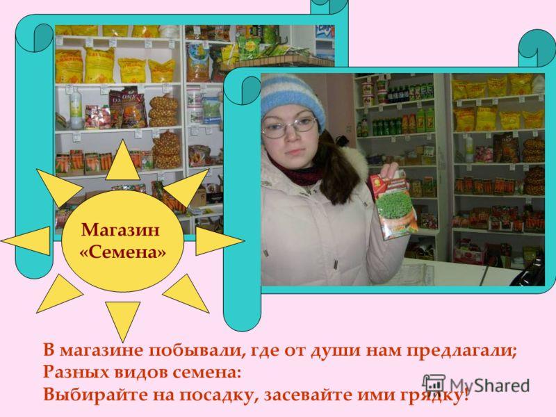 Магазин «Семена» В магазине побывали, где от души нам предлагали; Разных видов семена: Выбирайте на посадку, засевайте ими грядку!