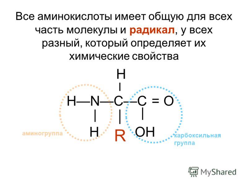Все аминокислоты имеет общую для всех часть молекулы и радикал, у всех разный, который определяет их химические свойства НNCC = O HOH H R аминогруппа карбоксильная группа