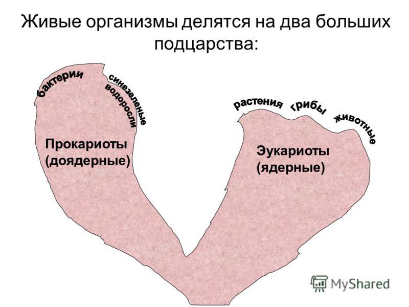 Живые организмы делятся на два больших подцарства: Прокариоты (доядерные) Эукариоты (ядерные)