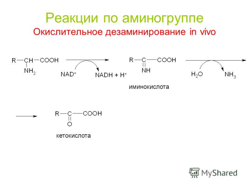 Реакции по аминогруппе Окислительное дезаминирование in vivo иминокислота кетокислота