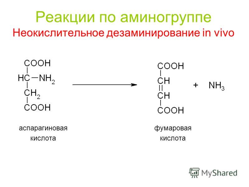 Реакции по аминогруппе Неокислительное дезаминирование in vivo аспарагиновая фумаровая кислота кислота