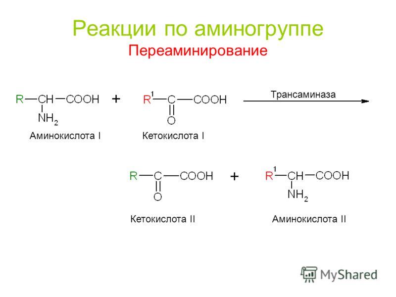 Реакции по аминогруппе Переаминирование Аминокислота I Кетокислота I Кетокислота II Аминокислота II Трансаминаза