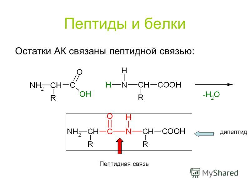 Дипептид