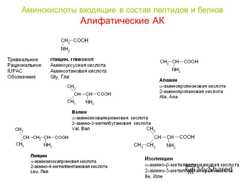 Аминокислоты входящие в состав пептидов и белков Алифатические АК