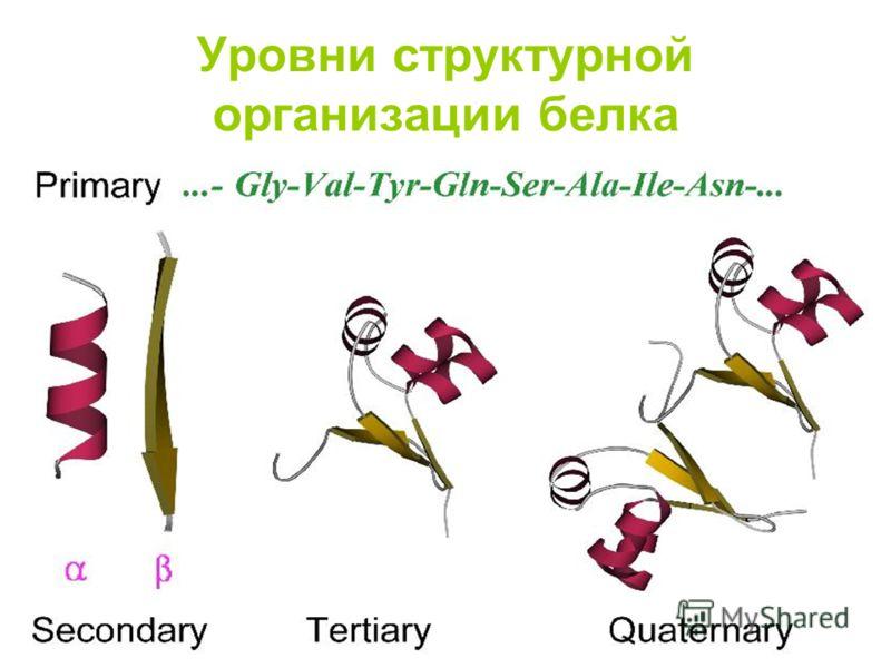 Уровни структурной организации белка