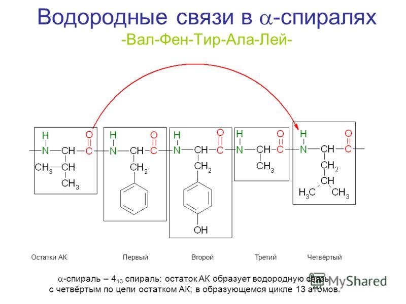 Водородные связи в -спиралях -Вал-Фен-Тир-Ала-Лей- Первый Второй Третий ЧетвёртыйОстатки АК: -спираль – 4 13 спираль: остаток АК образует водородную связь с четвёртым по цепи остатком АК; в образующемся цикле 13 атомов.