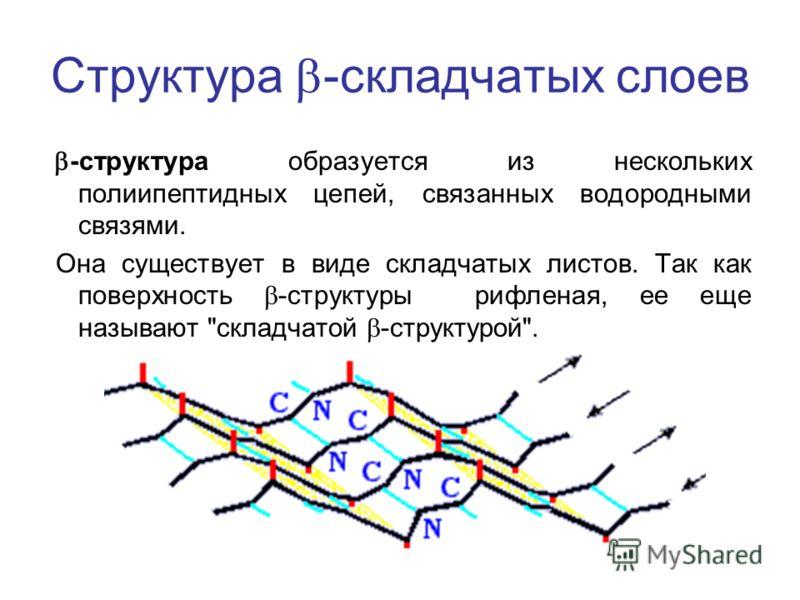 Структура -складчатых слоев -структура образуется из нескольких полиипептидных цепей, связанных водородными связями. Она существует в виде складчатых листов. Так как поверхность -структуры рифленая, ее еще называют складчатой -структурой.