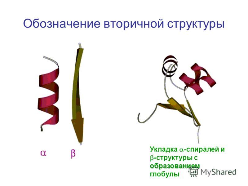 Обозначение вторичной структуры Укладка -спиралей и образованием -структуры с образованием глобулы