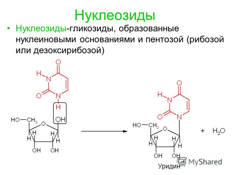 Нуклеозиды Нуклеозиды-гликозиды, образованные нуклеиновыми основаниями и пентозой (рибозой или дезоксирибозой) Уридин