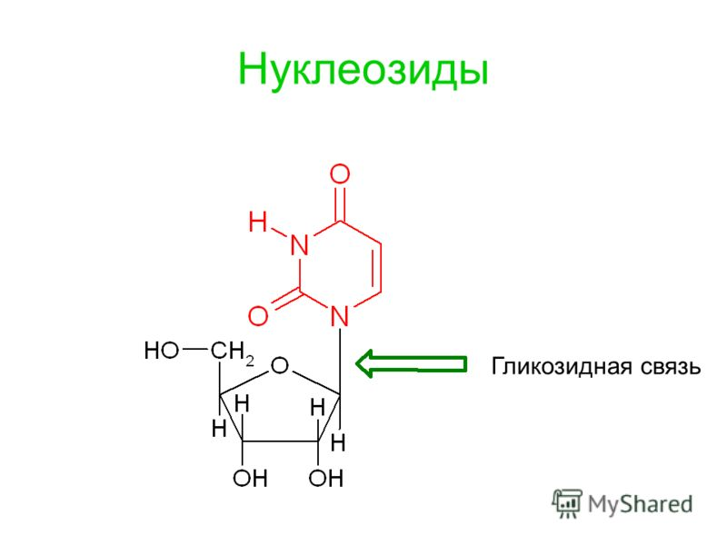 Нуклеозиды Гликозидная связь