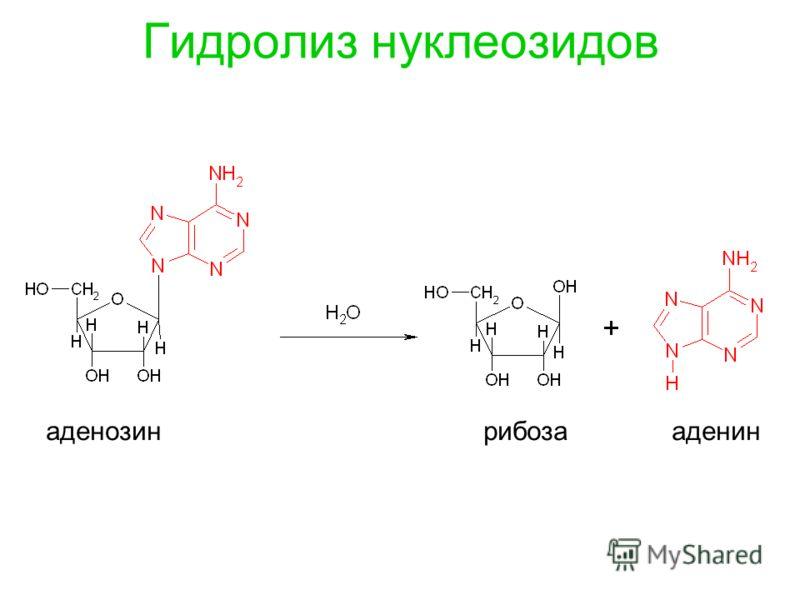 Гидролиз нуклеозидов аденозин рибоза аденин