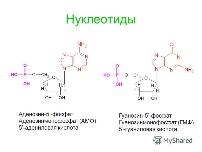 Нуклеотиды Аденозин-5-фосфат Аденозинмонофосфат (АМФ) 5-адениловая кислота Гуанозин-5-фосфат Гуанозинмонофосфат (ГМФ) 5-гуаниловая кислота