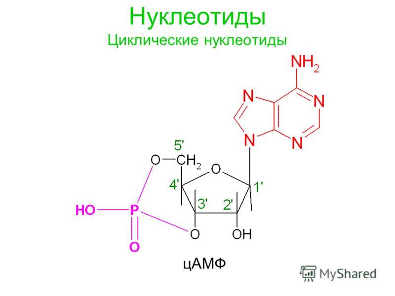Нуклеотиды Циклические нуклеотиды цAMФ