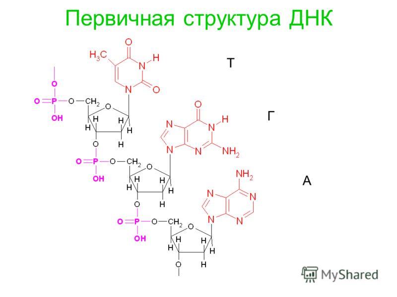 Первичная структура ДНК Т Г А