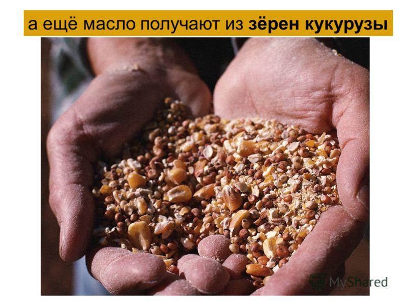 а ещё масло получают из зёрен кукурузы