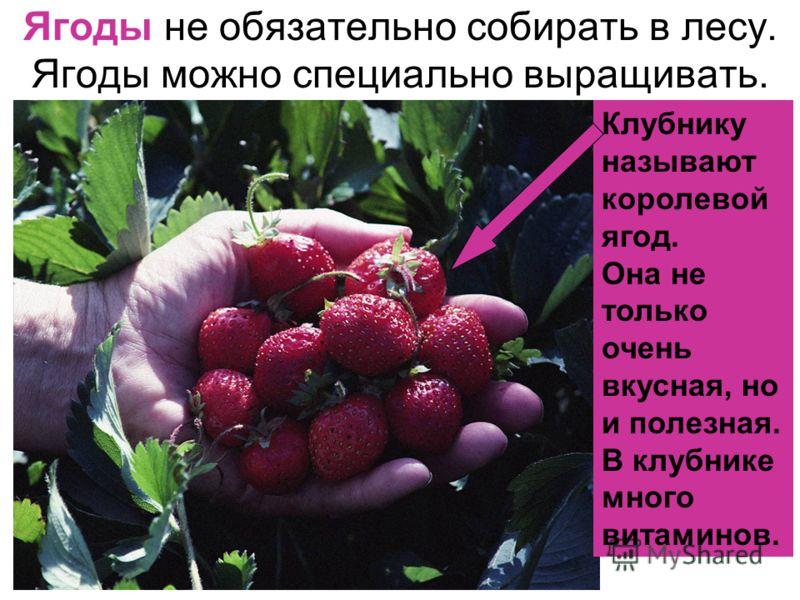 Ягоды не обязательно собирать в лесу. Ягоды можно специально выращивать. Клубнику называют королевой ягод. Она не только очень вкусная, но и полезная. В клубнике много витаминов.