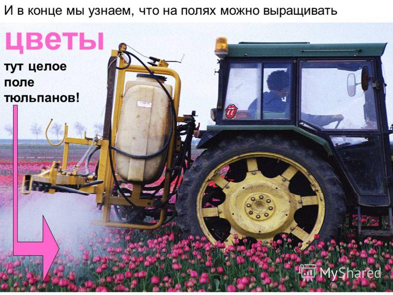 И в конце мы узнаем, что на полях можно выращивать цветы тут целое поле тюльпанов!