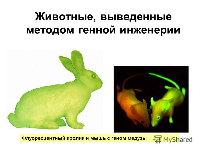 Животные, выведенные методом генной инженерии Флуоресцентный кролик и мышь с геном медузы