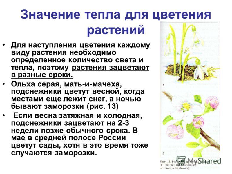 Значение тепла для цветения растений Для наступления цветения каждому виду растения необходимо определенное количество света и тепла, поэтому растения зацветают в разные сроки. Ольха серая, мать-и-мачеха, подснежники цветут весной, когда местами еще