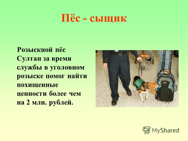 Пёс - сыщик Розыскной пёс Султан за время службы в уголовном розыске помог найти похищенные ценности более чем на 2 млн. рублей.