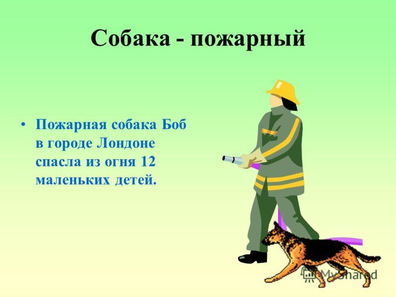 Собака - пожарный Пожарная собака Боб в городе Лондоне спасла из огня 12 маленьких детей.