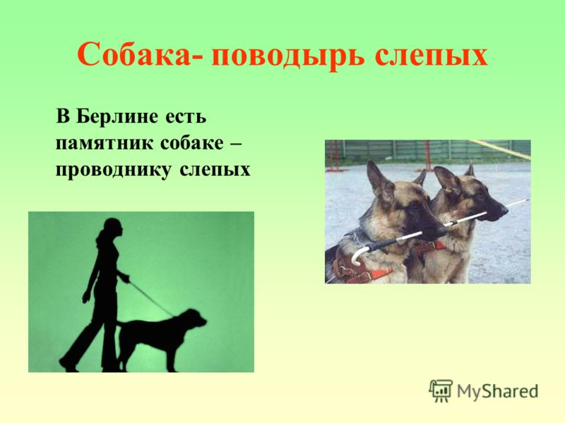 Собака- поводырь слепых В Берлине есть памятник собаке – проводнику слепых