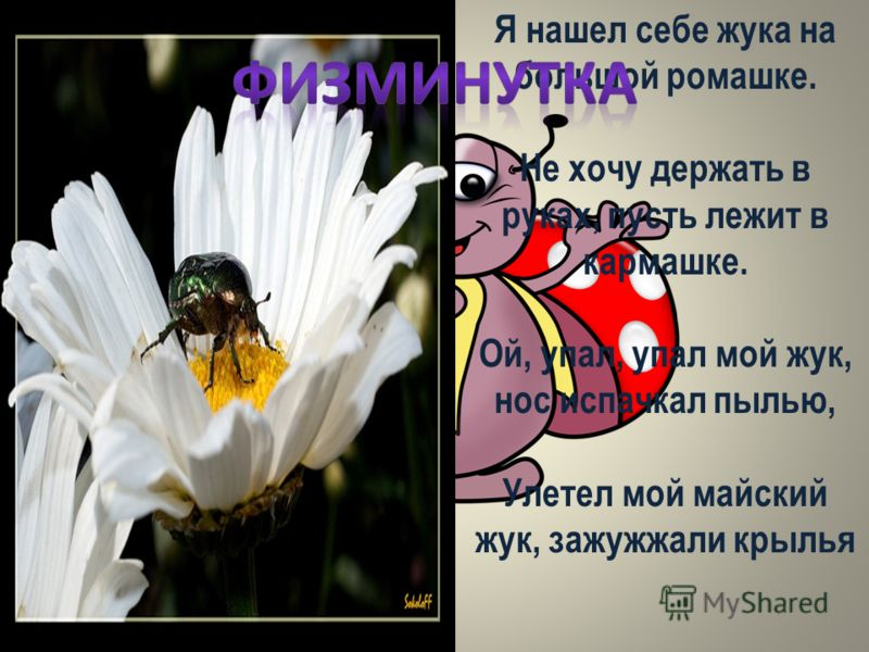 Я нашел себе жука на большой ромашке. Не хочу держать в руках, пусть лежит в кармашке. Ой, упал, упал мой жук, нос испачкал пылью, Улетел мой майский жук, зажужжали крылья