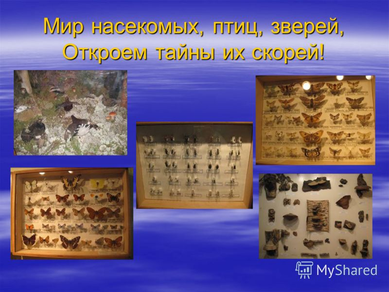 Мир насекомых, птиц, зверей, Откроем тайны их скорей!
