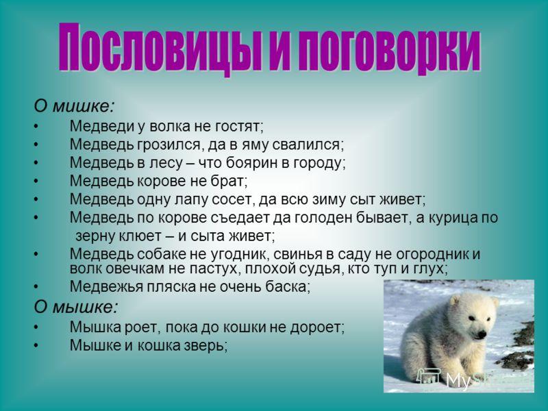 О мишке: Медведи у волка не гостят; Медведь грозился, да в яму свалился; Медведь в лесу – что боярин в городу; Медведь корове не брат; Медведь одну лапу сосет, да всю зиму сыт живет; Медведь по корове съедает да голоден бывает, а курица по зерну клюе