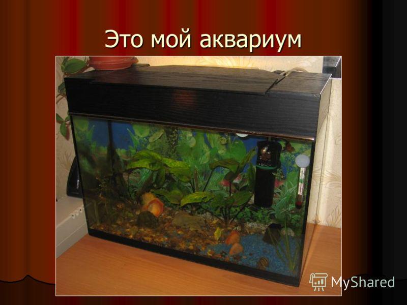 Это мой аквариум