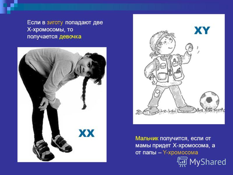 Если в зиготу попадают две X-хромосомы, то получается девочка XX Мальчик получится, если от мамы придет X-хромосома, а от папы – Y-хромосома XY