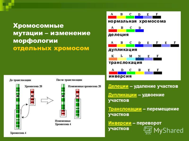 Хромосомные мутации – изменение морфологии отдельных хромосом Делеции – удаление участков Дупликации – удвоение участков Транслокации – перемещение участков Инверсии – переворот участков
