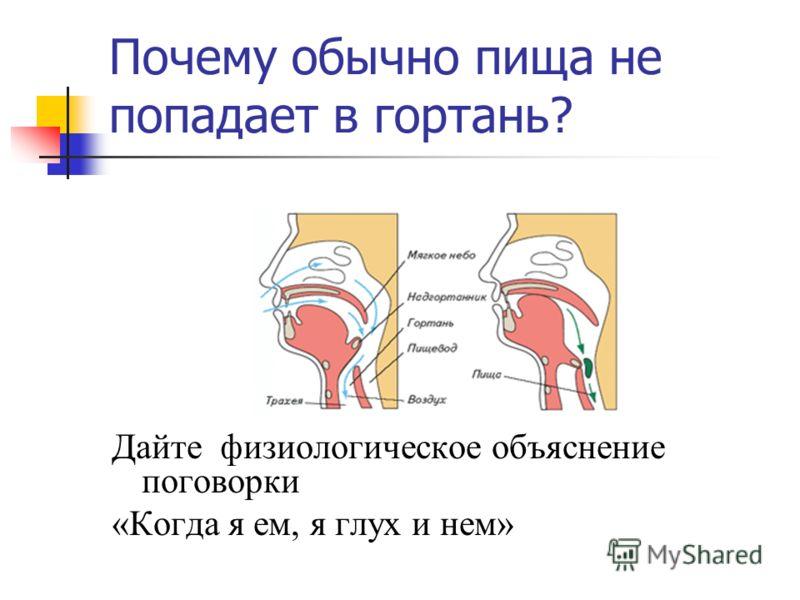 Почему обычно пища не попадает в гортань? Дайте физиологическое объяснение поговорки «Когда я ем, я глух и нем»