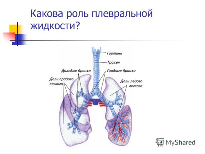 Какова роль плевральной жидкости?