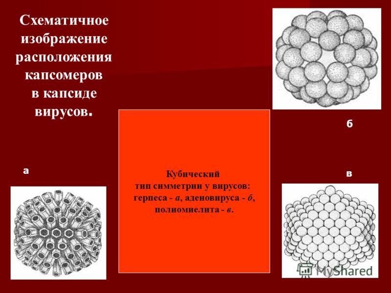 Кубический тип симметрии у вирусов: герпеса - а, аденовируса - б, полиомиелита - в. Схематичное изображение расположения капсомеров в капсиде вирусов. а б в