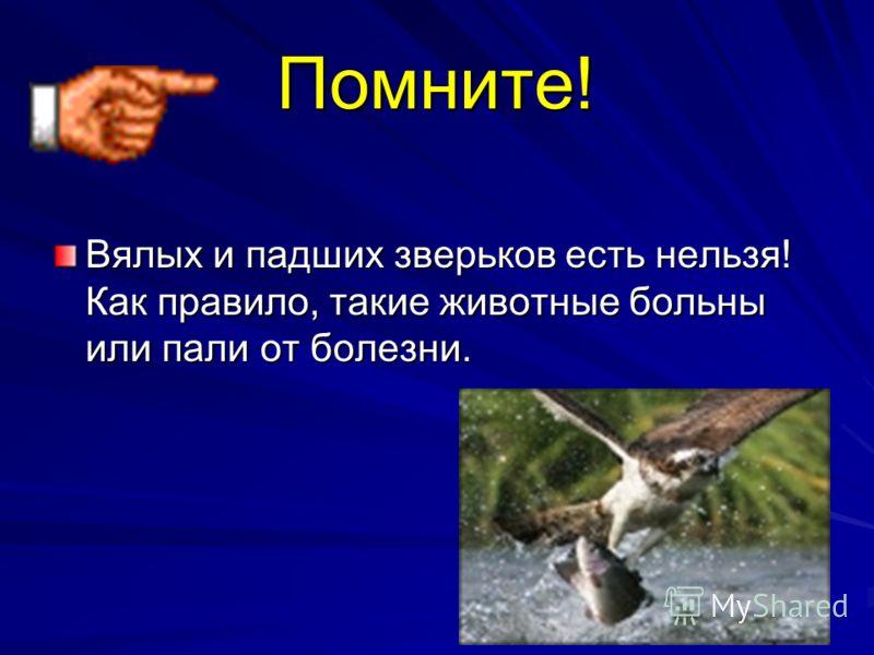 Помните! Вялых и падших зверьков есть нельзя! Как правило, такие животные больны или пали от болезни.
